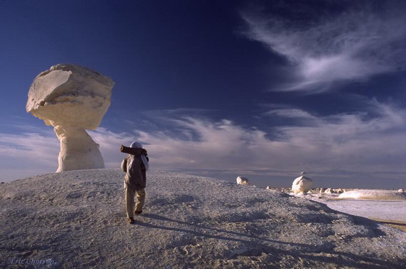 champignon du désert blanc